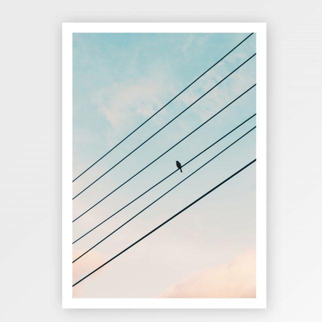 Bird on wire 1