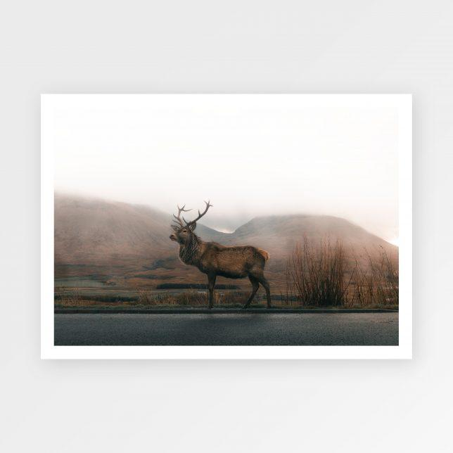 Deer on the road 1