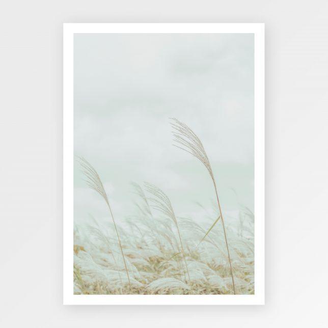 Grass Silberspinne 1