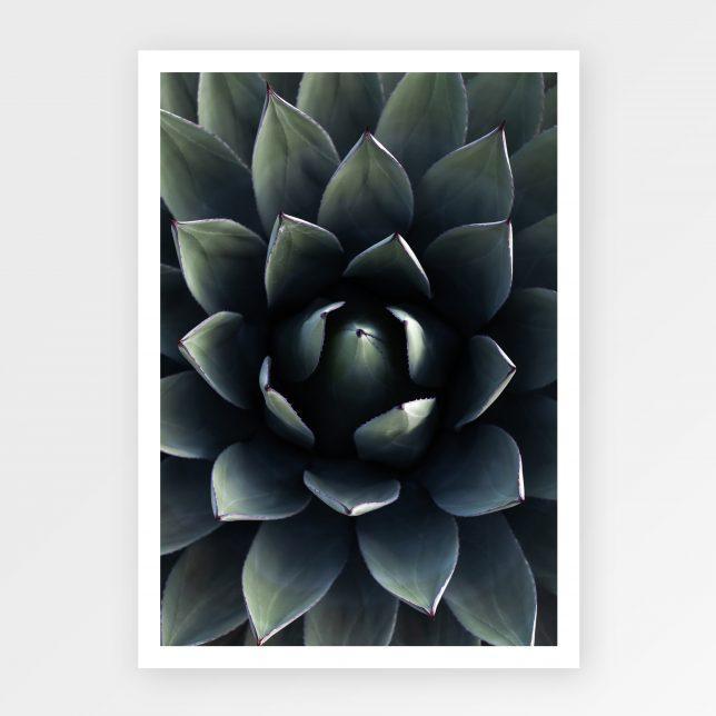 Kaktus neomexicana 1