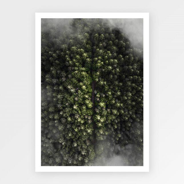 Foggy road 1