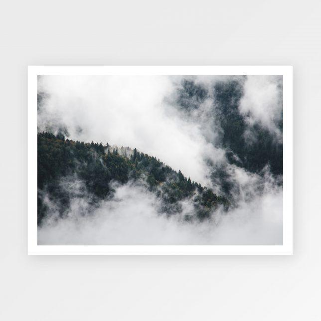 Forrest sky 1