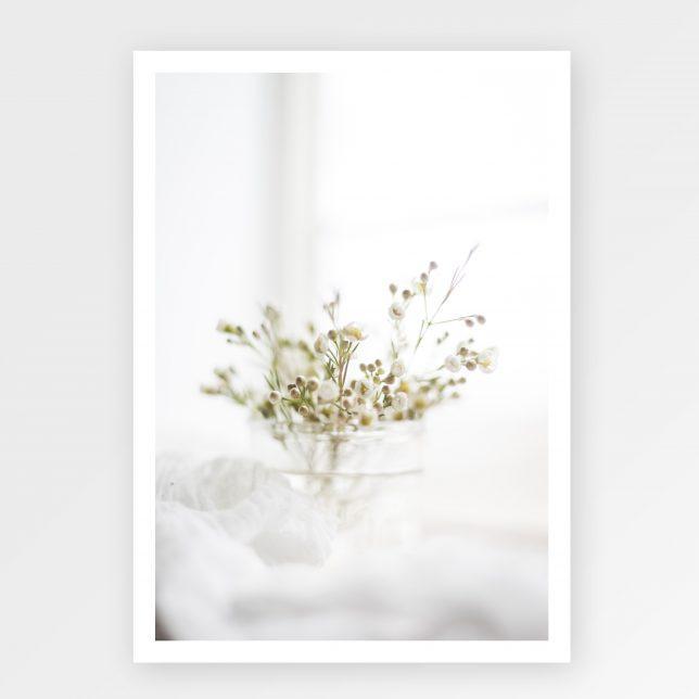 Snow Quenn 1