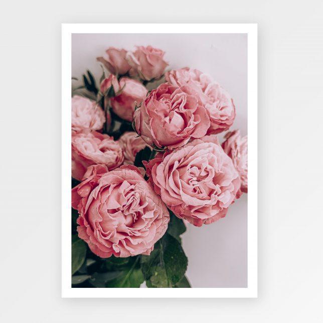 Strawberry rose 1