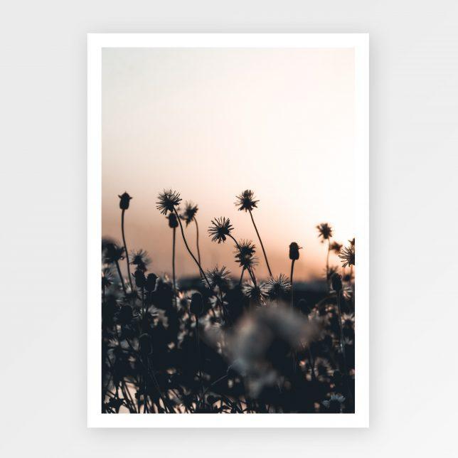 Sunset flowers 1