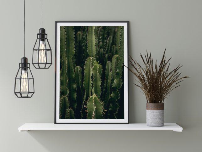 Cactus euphorbia 2