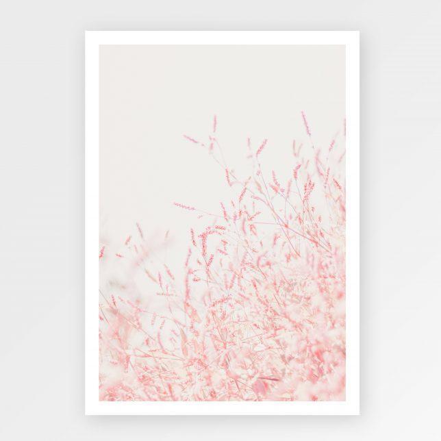 Pink levander 1