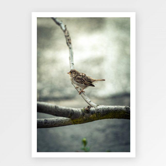 Ptáček na větvičce 1