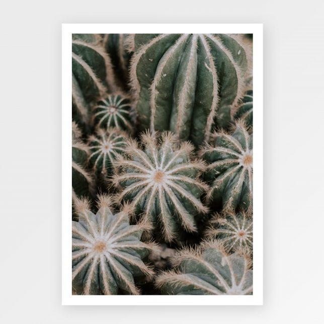 Tarantula cactus 1